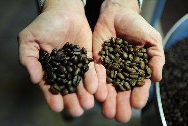 Diferencia Café Torrefacto vs Natural