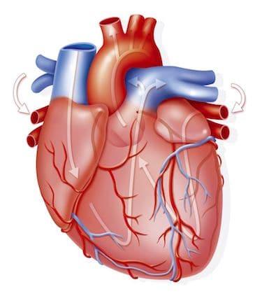 Por qué el café acelera el corazón