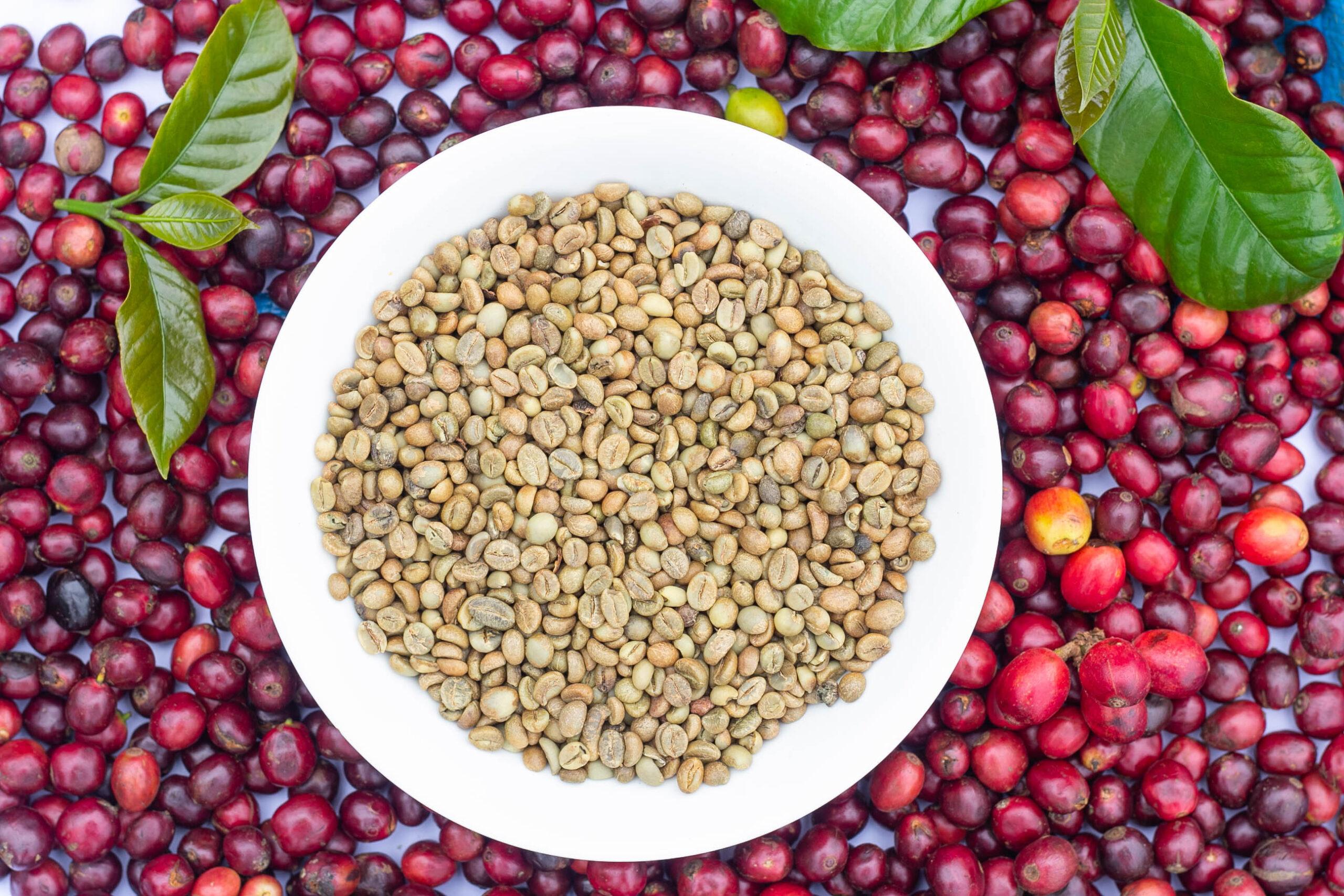 Granos de café rojos y verdes