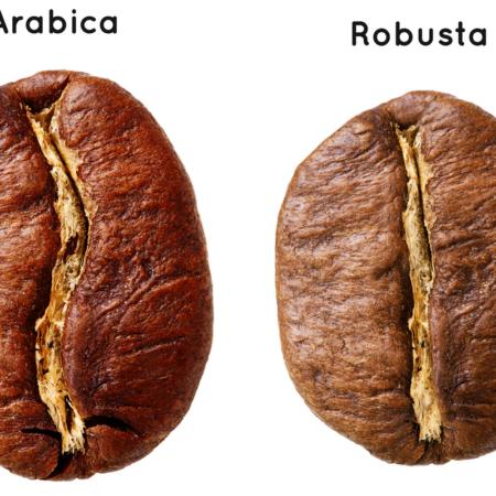 cafe-robusta-cafe-arabigo